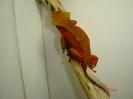 X 3 Rhacodactylus ciliatus samička patternless red